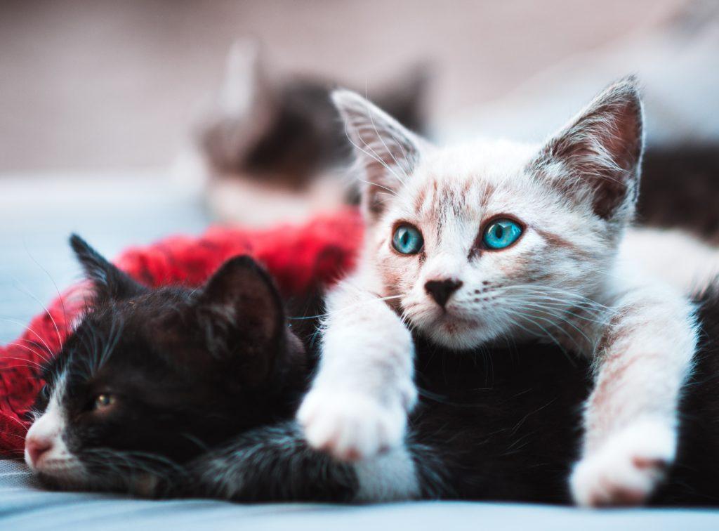 ハイエフィカシーのモデルは赤ちゃんや動物