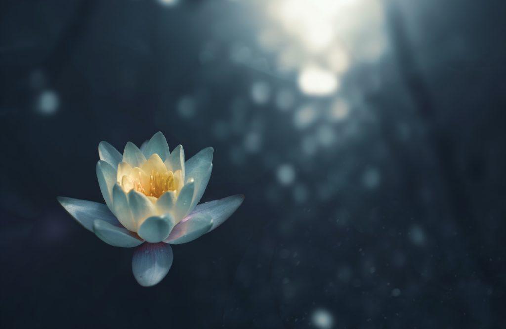 瞑想のやり方には静的なものと動的なものがある