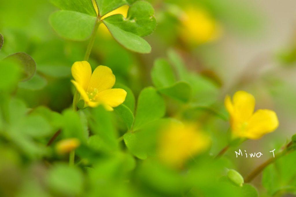 自粛には花で心を慰める