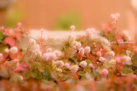 花の薫りの効用